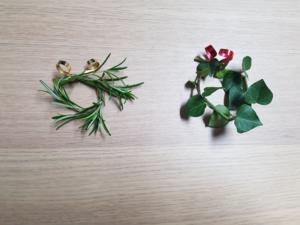 Kleine Kränze: links aus Rosmarin, rechts aus Efeu