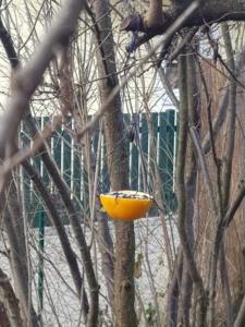 halbe Orangenschale mit Vogelfutter an einem Baum aufgehängt