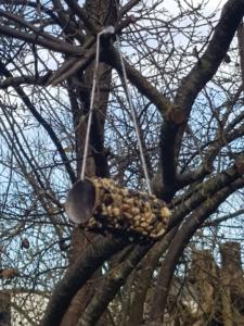 Vogelfutter an einer leeren Klorolle hängt in einem Baum