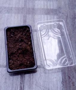 Eine leere Sushi-Box wurde mit Erde gefüllt.