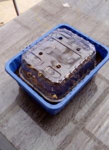 Eine blaue, leere Gemüse-Box aus Plastik wurde mit Erde gefüllt. Eine leere, durchsichtige Gemüdse-Box wurde als Deckel oben drauf gesetzt.