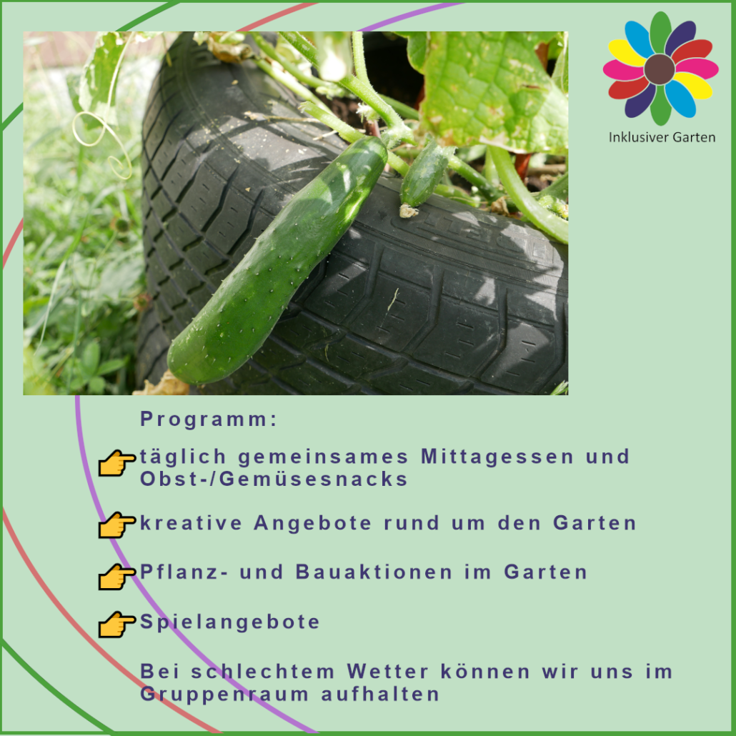 Foto eines Reifenhochbeets mit Gurkenpflanze, dazu der Programmtext für die Ferienbetreuung