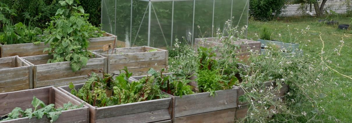 Foto vom Garten mit Gewächshaus und Hochbeeten